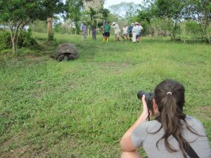 Uncruise giant tortoise